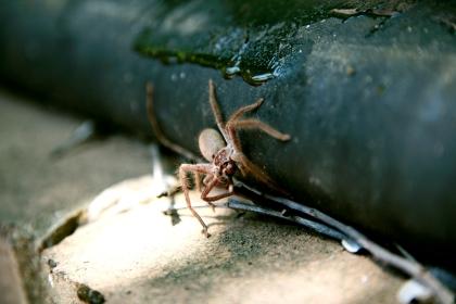 Mind the spider